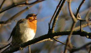 early-bird-1387226